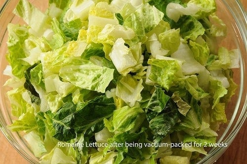 THE LETTUCE EXPERIMENT