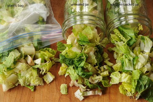 lettuce after 8 days