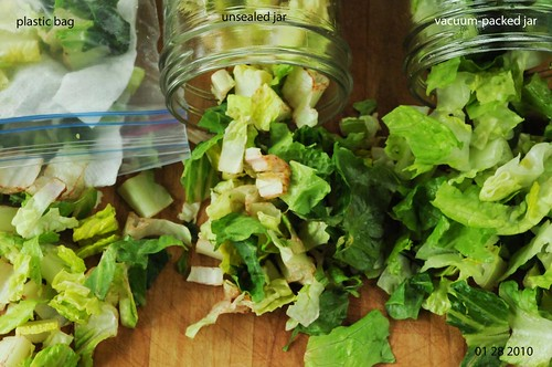 lettuce after 12th day