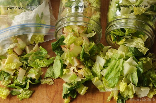 lettuce after 14th day