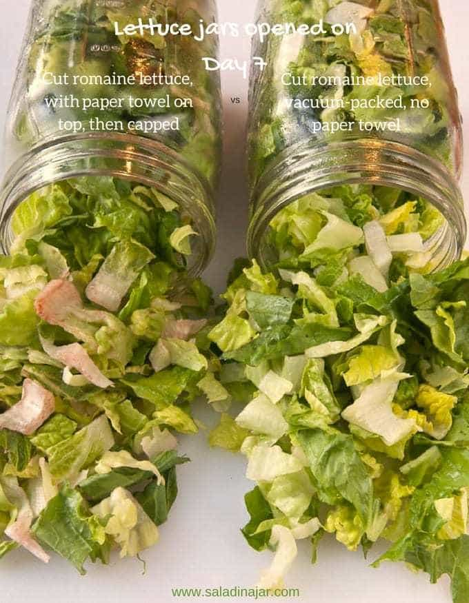 comparing cut lettuce after 7 days