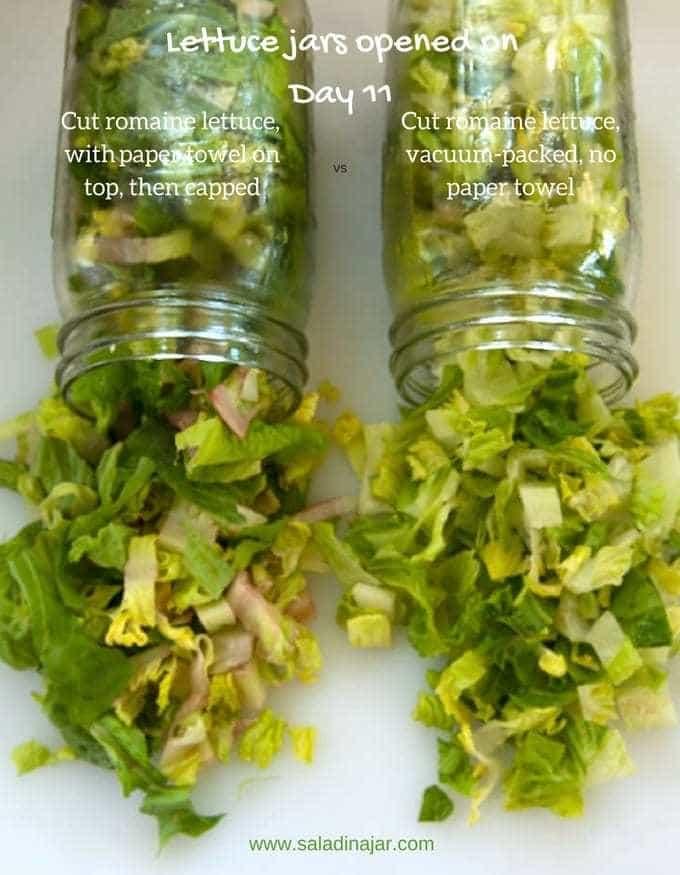 comparison of lettuce .. wasting money on lettuce gone bad
