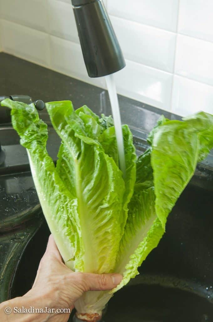 washing lettuce leaves