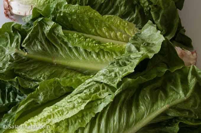 uncut romaine lettuce