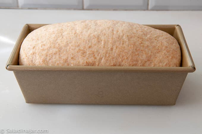 loaf of bread after proofing, before going into the oven